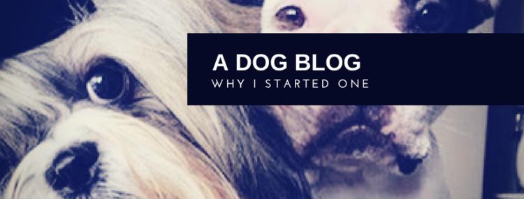 indian dog blog, indian pet blog,