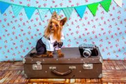 Pets em Londres   Londonnices: Dicas & Experiências em Londres