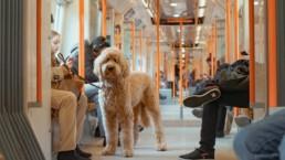 Pets em Londres | Londonnices: Dicas & Experiências em Londres