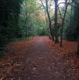 Bosque no Parque Holland Park em Londres