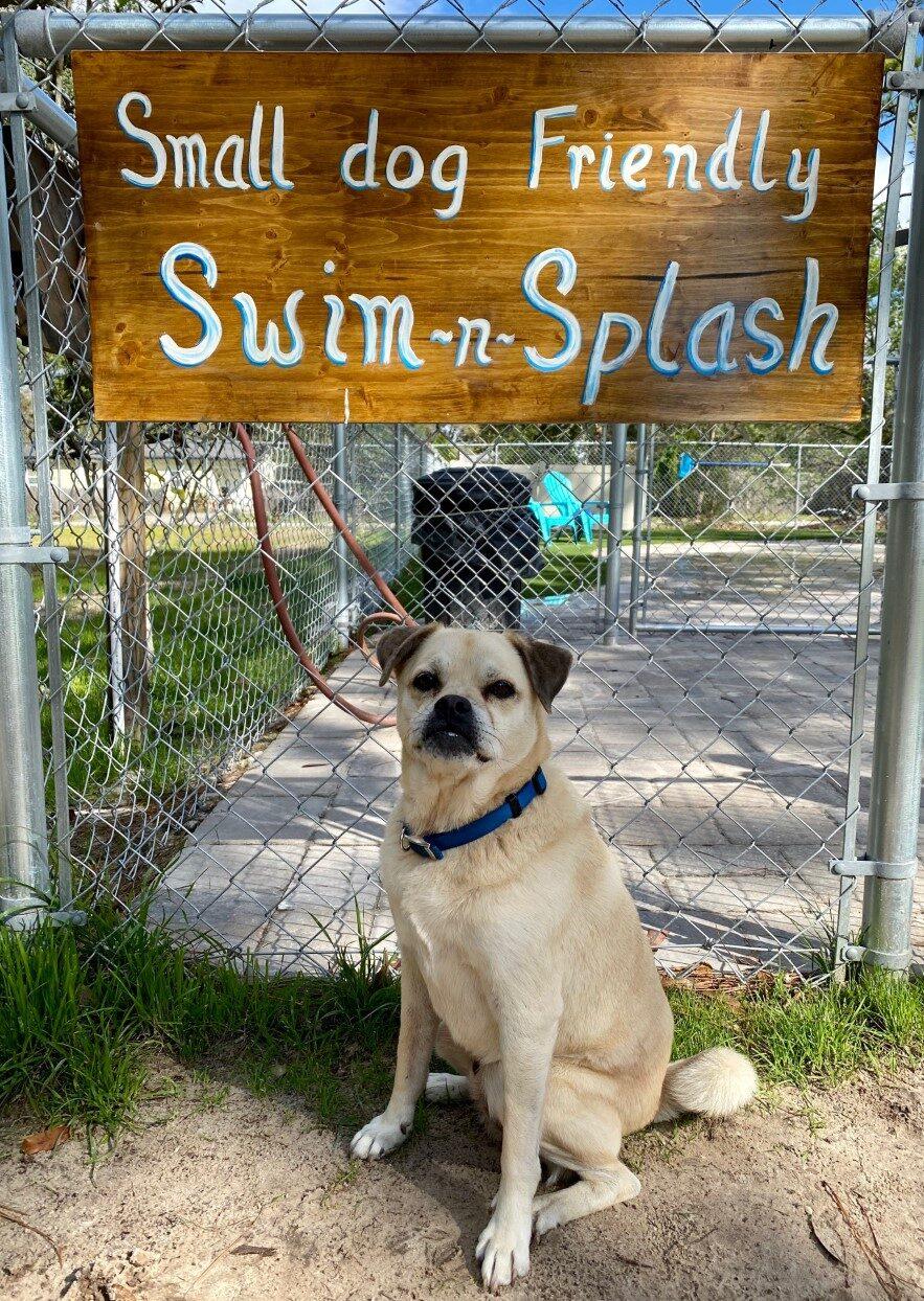 Jasper Splash