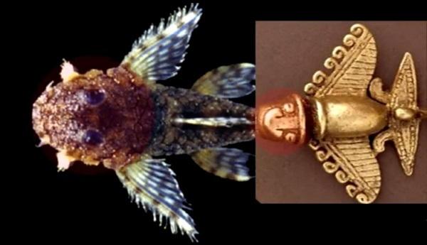 Jet statuetta Quimbaya e una figura di pesce gatto