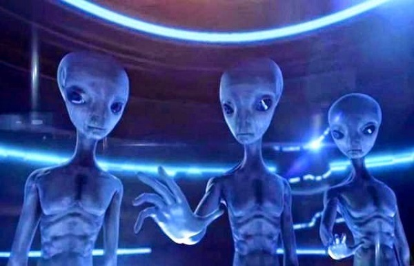 specie aliene i grigi