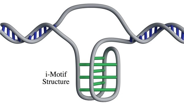 nuuova struttura-DNA