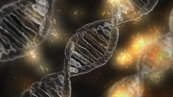 Studio scientifico: DNA