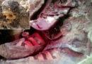 Il misterioso caso della mummia che sembra avere le scarpe da tennis