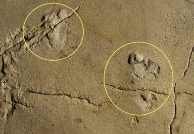 Impronte di 5,7 milioni di anni sfidano la storia dell'evoluzione umana