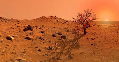"""I misteriosi """"alberi"""" di Marte: """"strane fotografie del pianeta rosso"""""""