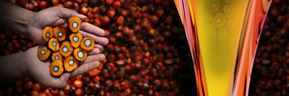 We also plan to introducePalm Oil Products in Pakistan