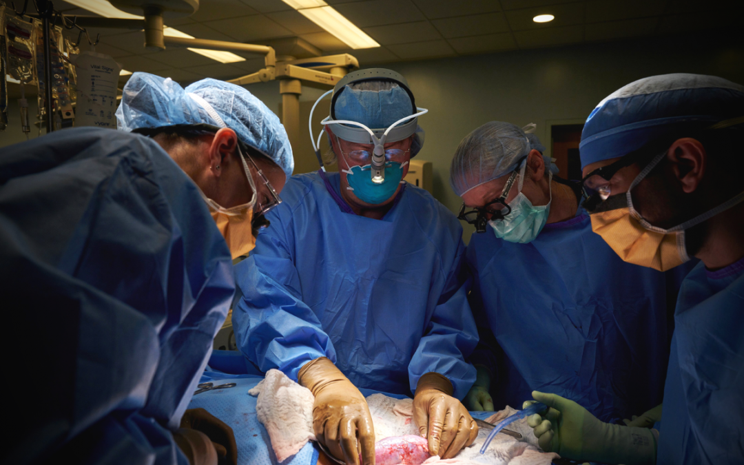 Pig Kidney Successfully Transplanted into Human Patient