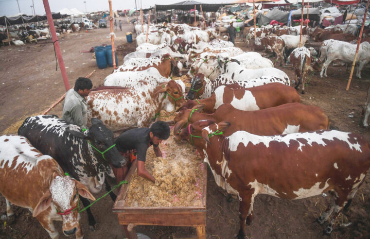 Are Pakistanis going to get 9 holidays for EidUl Adha this year?