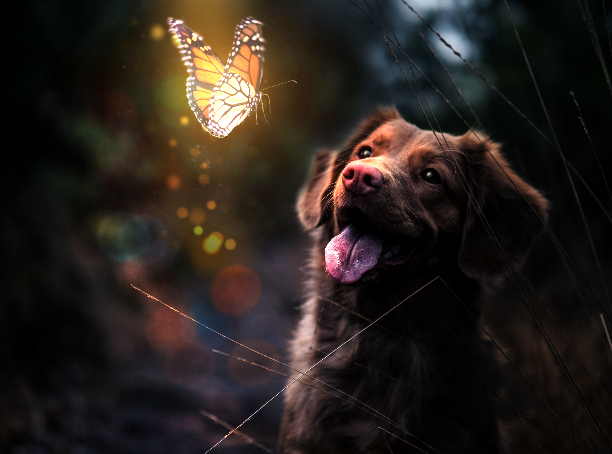 glowing-butterfly-and-dog-3-1