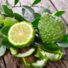 THE POWER OF BERGAMOT, CALMS THE SOUL Go2