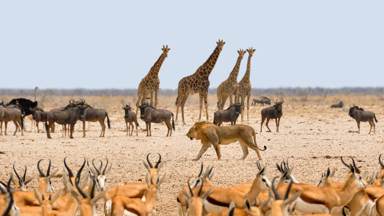 Namibia Safari tour with lions