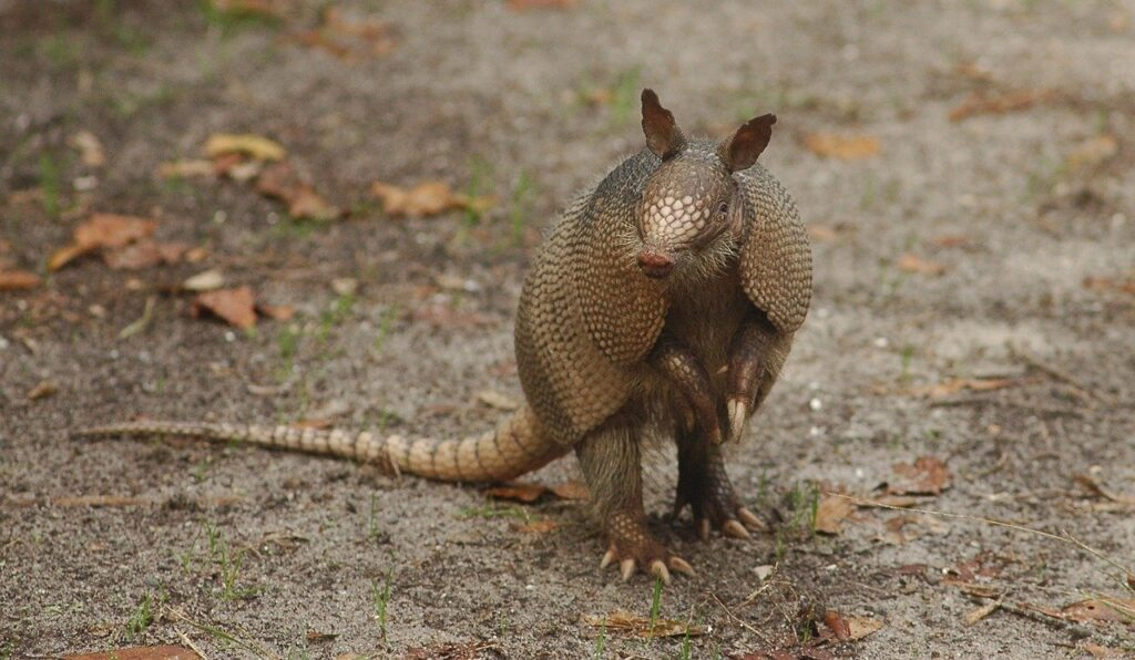 Insulate Yourself Exercise - armadillo