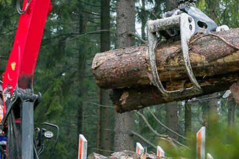 Ein Bediener in einem Greifer beim Verladen von Rundholz auf eine LKW-Ladefläche auf einer Mercer Holz Baustelle im Harz