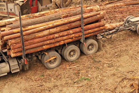 Holzlaster mit einer Ladung Rundholz auf einer Mercer Celgar Baustelle