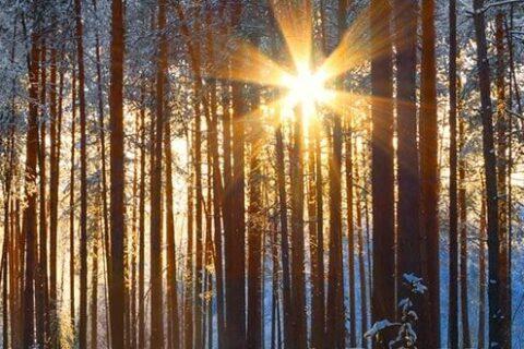 Ein Wald im Harz, Deutschland im Winter, die Sonne lugt durch die Bäume