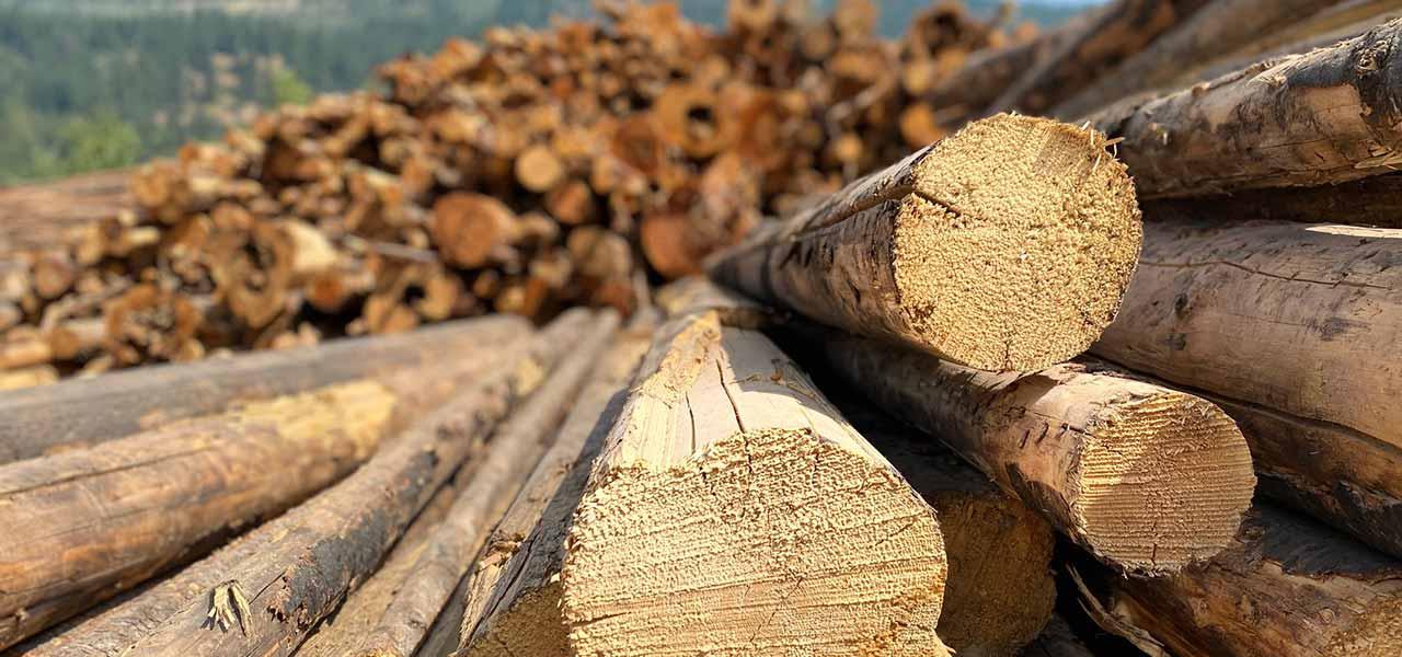 Nachhaltige, erneuerbare, biobasierte Produkte aus Holz