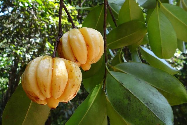 Amazing Benefits of Garcinia Cambogia