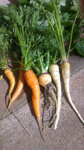 blog raw root veg