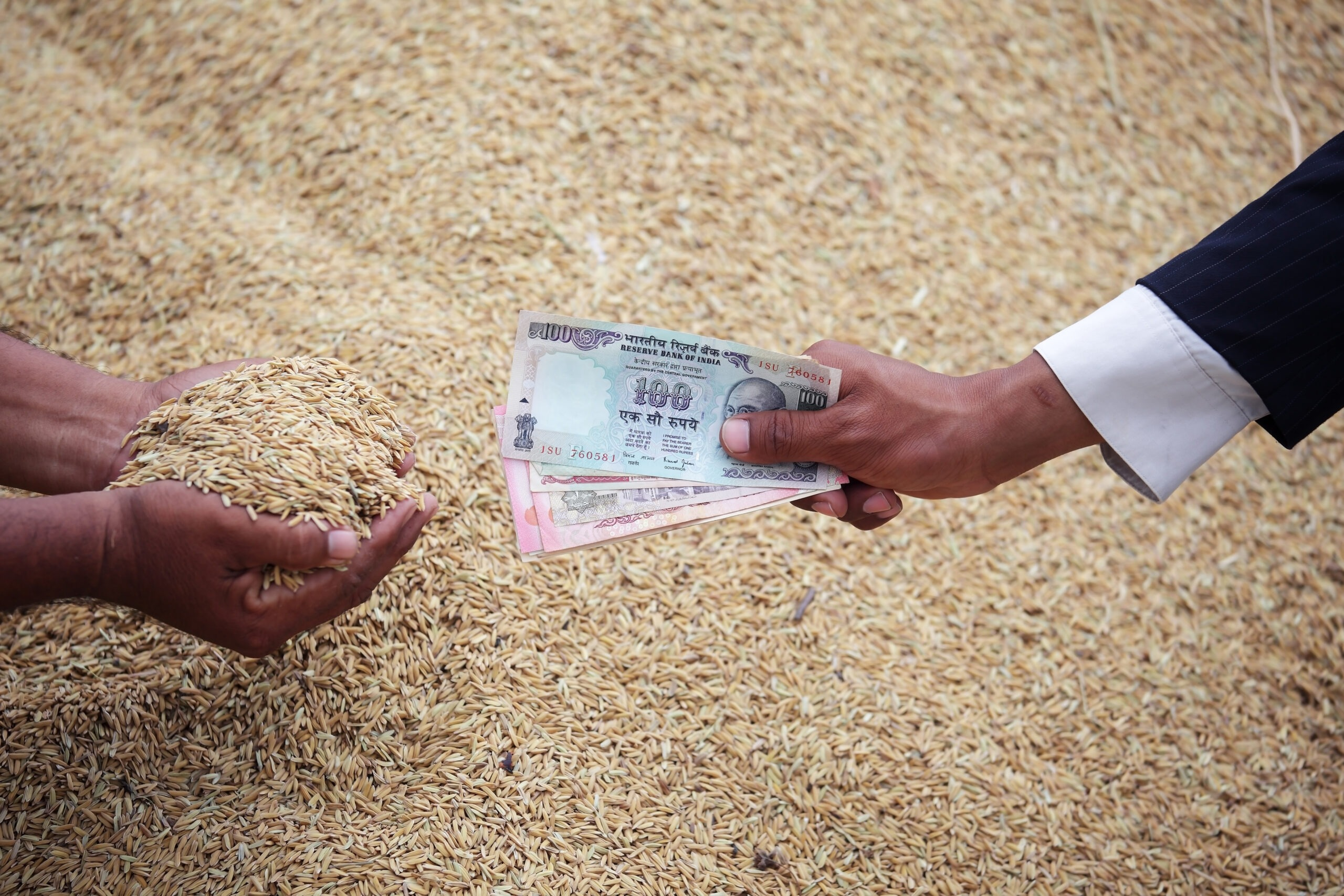 hand of businessman and farmer trading rice grain with rupee note with rice grain background.