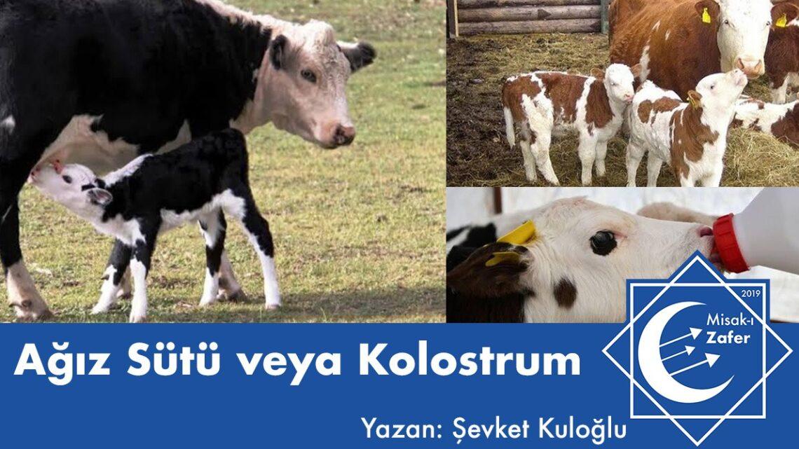 Ağız Sütü veya Kolostrum
