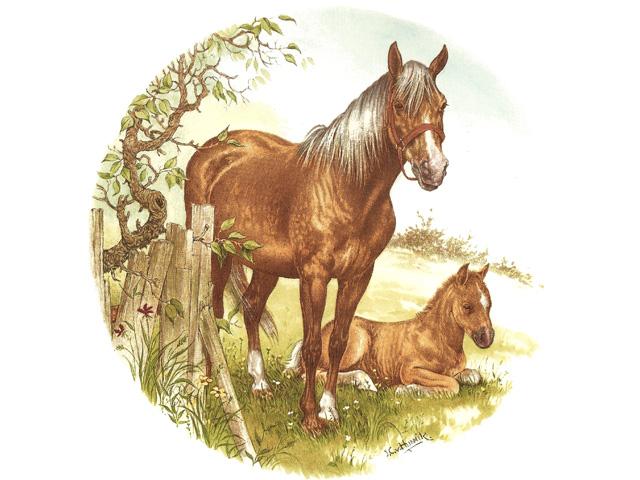 Horses / Donkeys