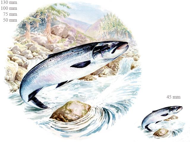 Fish / Fishing/Sealife