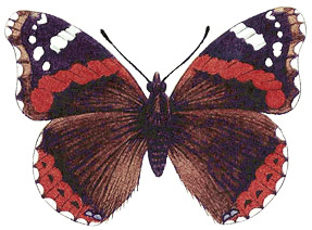 Butterfly, Butterflies and Insects