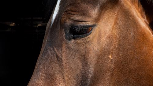 Depressed racehorse making trainer question his own future