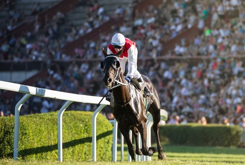 """Weren't we supposed to lose?"" horse asks jockey"