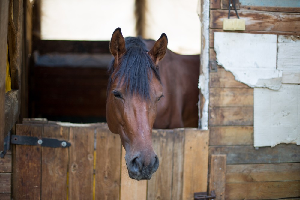 A horse is so bored in the coronavirus lockdown he would even consider trying to win a race.