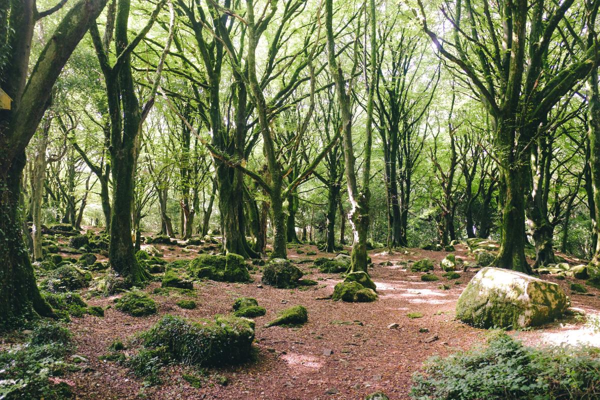 Woodland-Walks-4