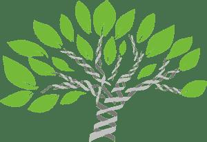 Ancestry Links
