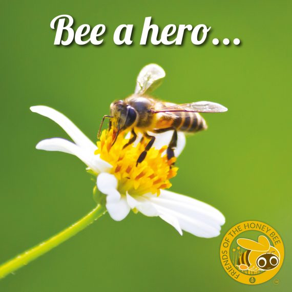 Friends of the Honey Bee