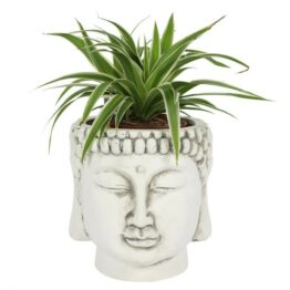 Large White Terracotta Buddha Head Planter