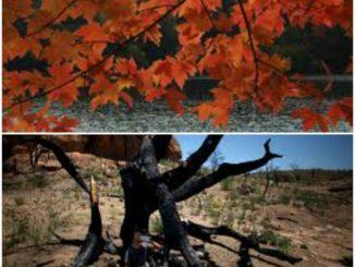 درختوں کا قتل