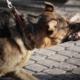responsabilidad extracontractual por mascotas