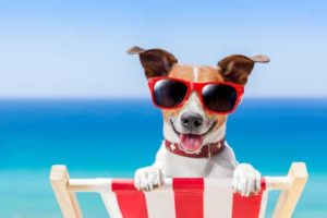 Dog in a deckchair wearing sunglasses