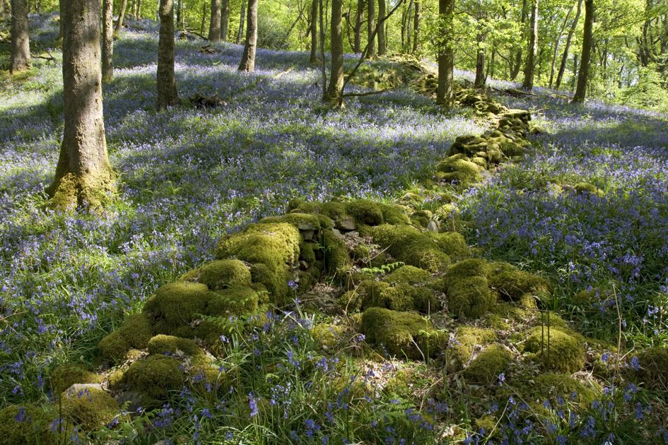 Fishgarths Wood