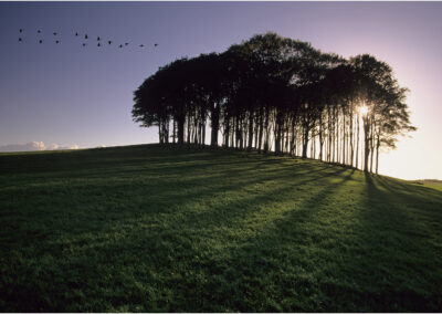 "The copse on the hill, sometimes called ""The nearly home trees"".  The actual name is Cookworthy Knapp."