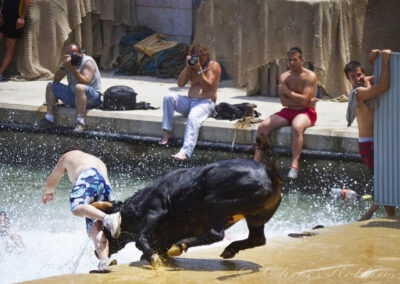 The 'Bous a la Mar' Festival or' Bulls to the Sea', Denia, Spain.