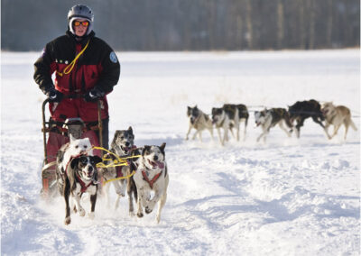 Dog sled racing in Canada.