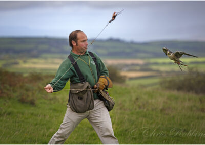 The falconer training his birds