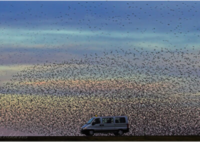 The Starling Swarm: this image won a Gold Medal at the Austrian Super Circuit 2006 one of the biggest photography contests in the world.
