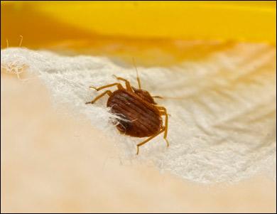 Bug bug exterminator preparation
