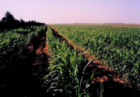 Superficie en cultivo