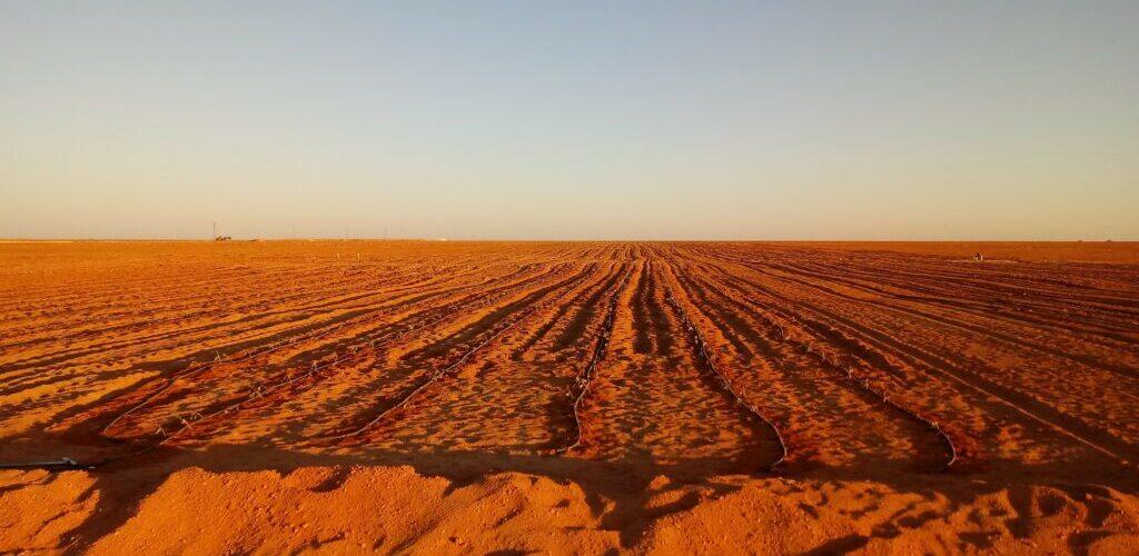 Proyecto Agroindustrial Integral Sidi Moussa en Adrar (Argelia)