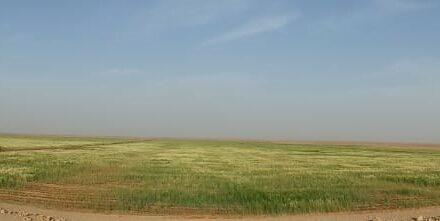 Cultivo en el desierto